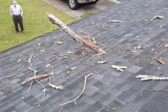 Tree Limb Damage